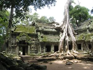 Ta Prohm Temple, near Angkor Wat