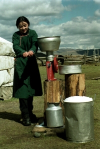 A Mongolian Herder Making Dairy Products*