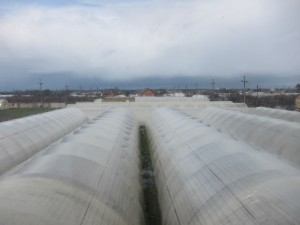 Kamenka's greenhouses from above