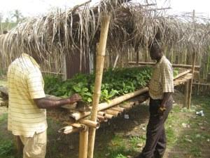 Seedling Social Business Site