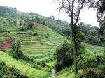 Hiking up a terrace farm to meet with a borrower (right before the rain falls)