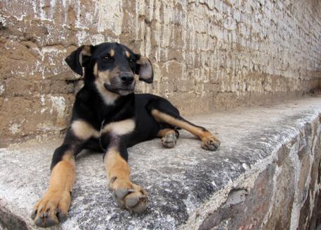 A viscious guard dog protecting his territory