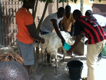 The men wash the cow to prepare it for the sacrafice.