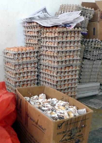 Eggs, eggs, eggs... Celestina's keeps the hens busy