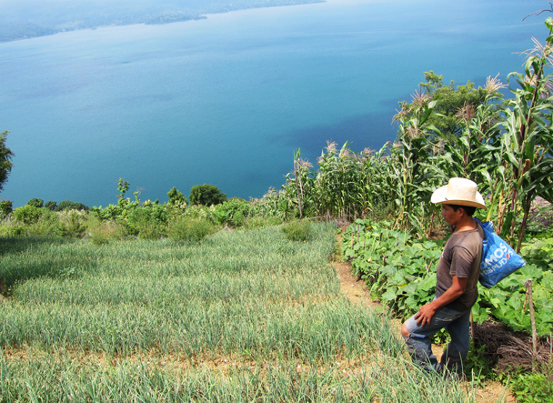 A borrower inspecting his onions that overlook Lake Atitlan