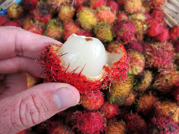 Testing a borrowers goods. Delicious rambutan!