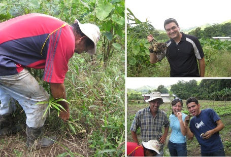 harvesting and enjoying our ginger!