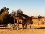 Wildlife outside Johannesburg