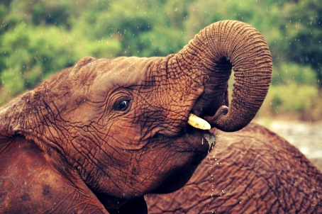 nairobi elephant orphanage2