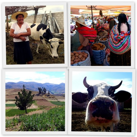 Farming in Cochabamba
