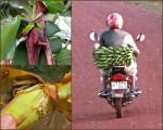 Banana collage5