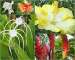 Flower collage4