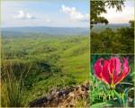 Ngara view collage7