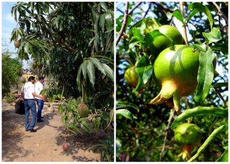 Emprender loan officers admire the mango and pomegranate trees that adorn Yélica's backyard