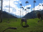 Valle de Cocora, Salento, Coffee Region