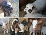 visiting the newborns