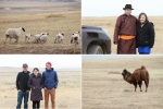 driving across the Mongolian steppes en route to Dornod