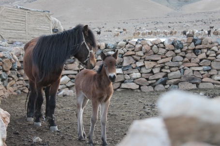 a horse and its foal that the family owns